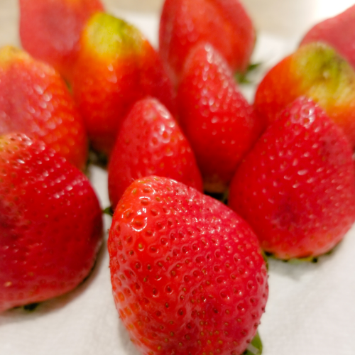 After pat drying each strawberry, leaving them to air dry on a paper towel.